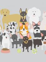 sach hay ve loai cho cover 150x200 - 10 cuốn sách hay về loài chó đáng yêu và trung thành