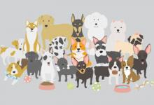 Photo of 10 cuốn sách hay về loài chó đáng yêu và trung thành