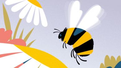 Photo of 5 quyển sách hay về loài ong vô cùng thú vị