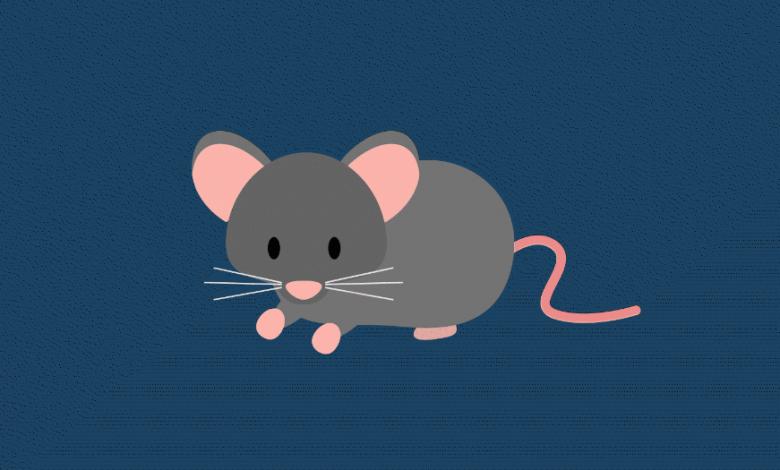 Photo of 5 quyển sách hay về loài chuột cho bạn nhiều thông tin thú vị